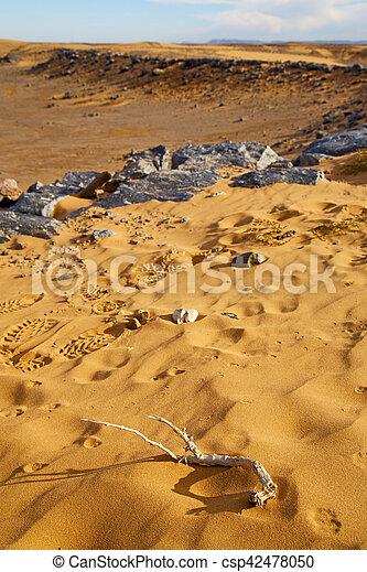 désert, pas, fossile, vieux - csp42478050