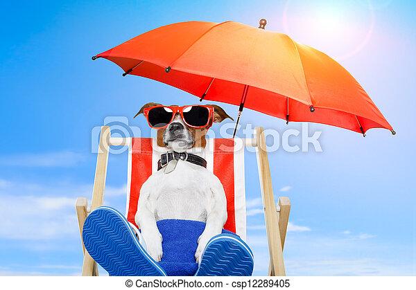 día de fiesta de verano, perro, vacaciones - csp12289405