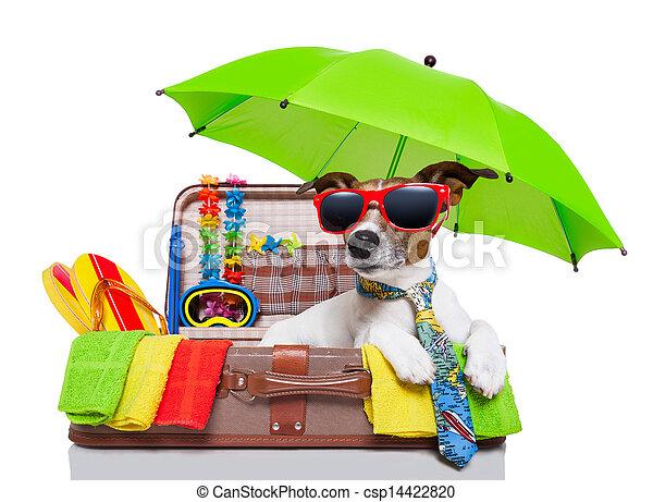 Perro de vacaciones de verano - csp14422820