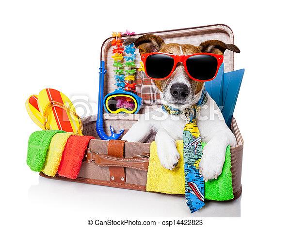 Perro de vacaciones de verano - csp14422823