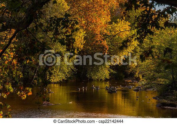 Sedona foliage en un día nublado de otoño - csp22142444