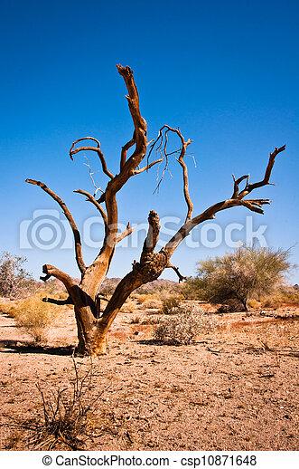 död, träd - csp10871648