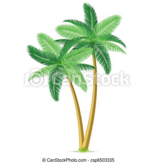 dłoń, tropikalny, drzewa - csp6503335