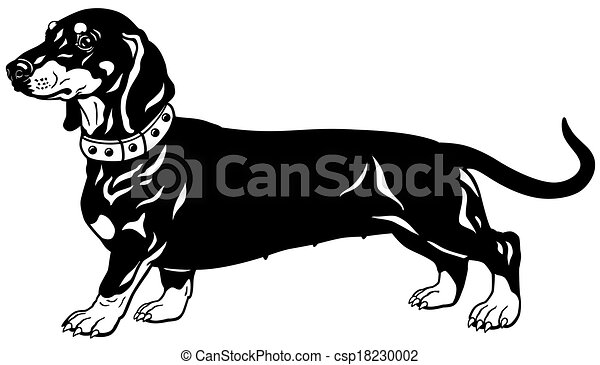 dachshund black white dog smooth haired dachshund breed side view rh canstockphoto com dachshund clipart images dachshund clipart free