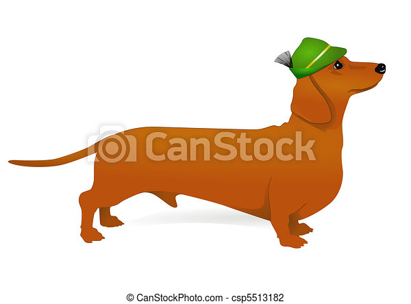 dachshund - csp5513182