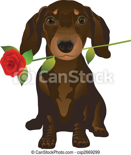 dachshund - csp2669299