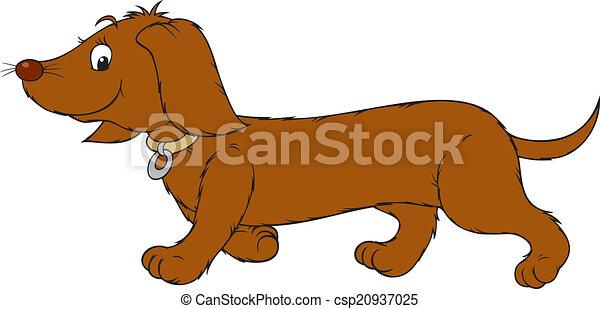 dachshund - csp20937025
