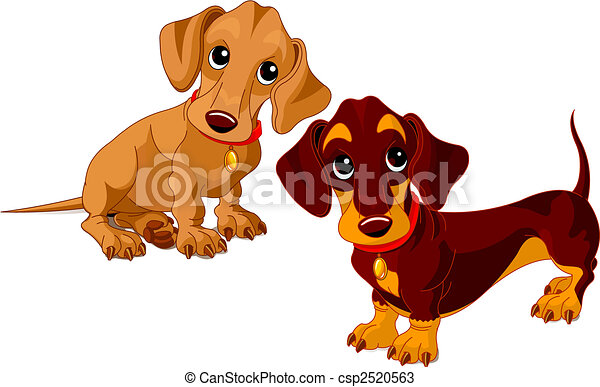 Dachshunds - csp2520563