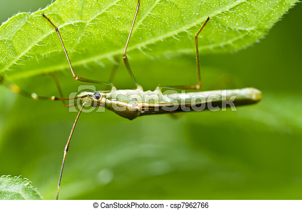 daddy-long-legs in green nature - csp7962766