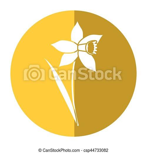 daffodil flower leaf bloom shadow - csp44733082