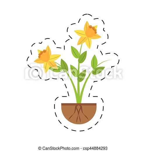 daffodil flower spring floral growing - csp44884293