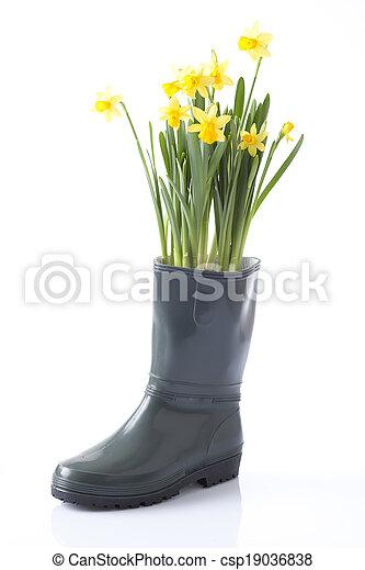 daffodil flowers, garden equipment - csp19036838