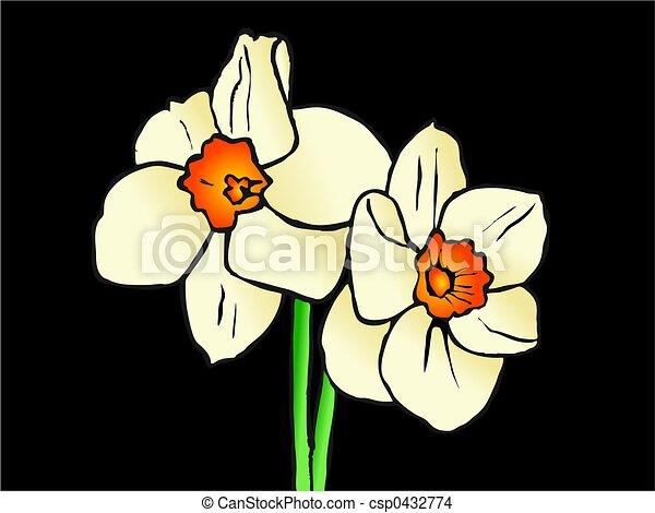 daffodils - csp0432774
