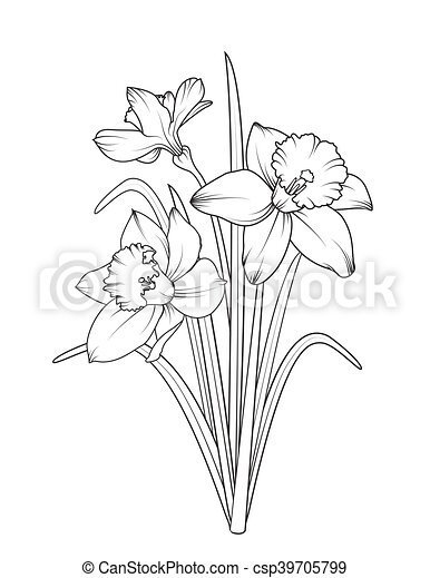 Daffodils narcissus spring flowers isolated daffodils narcissus daffodils narcissus spring flowers isolated csp39705799 mightylinksfo