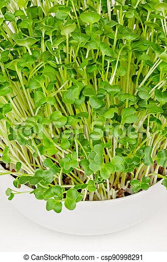 Daikon radish microgreens, close up, Japanese radish sprouts - csp90998291
