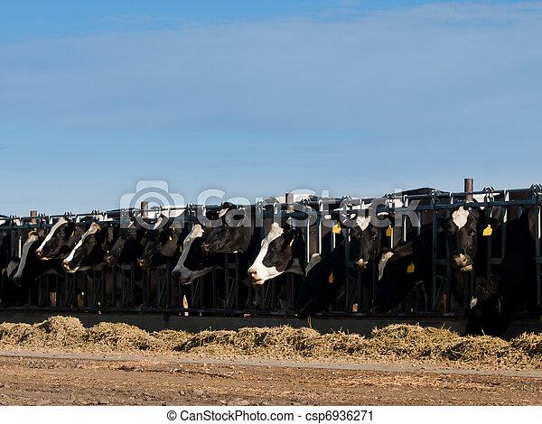 Dairy Farm - csp6936271
