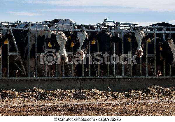 Dairy Farm - csp6936275