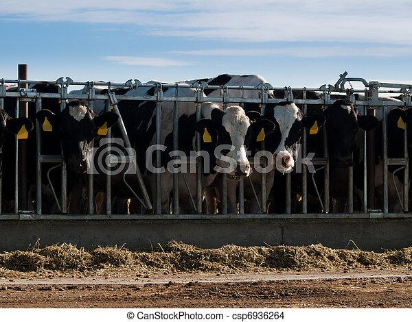 Dairy Farm - csp6936264