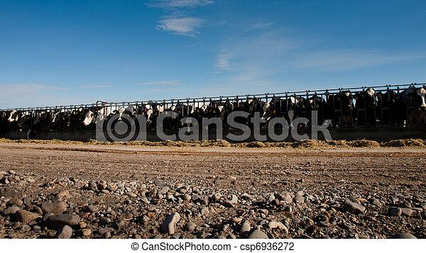 Dairy Farm - csp6936272