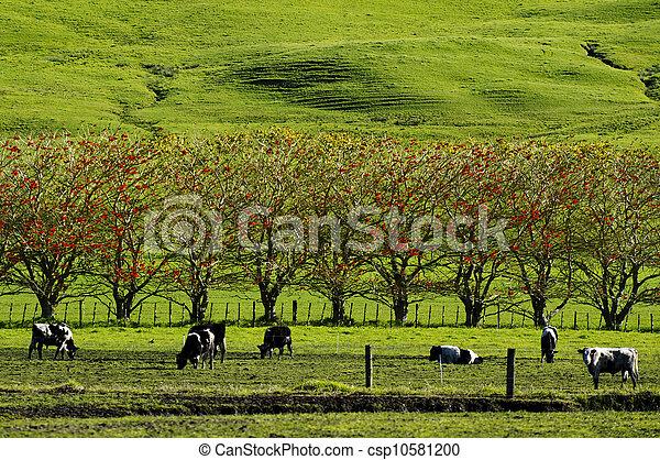 Dairy Farm - csp10581200