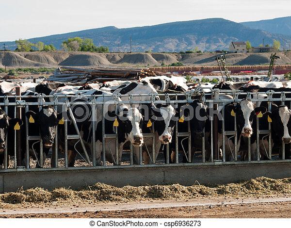 Dairy Farm - csp6936273