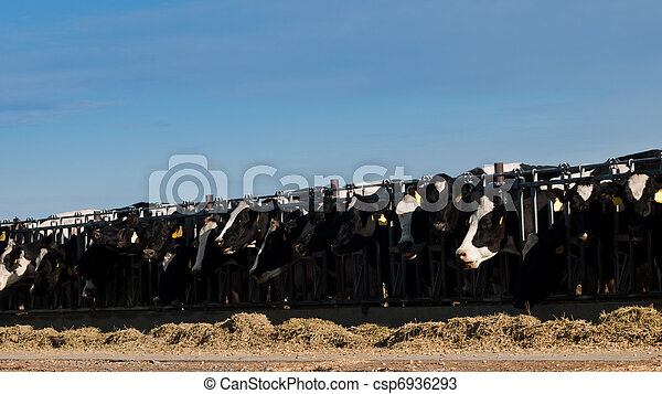 Dairy Farm - csp6936293