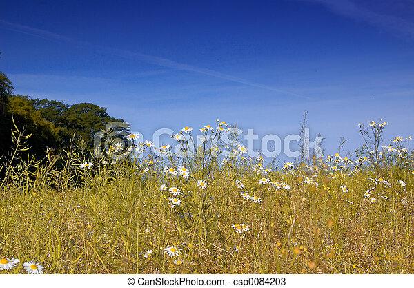 daisey field - csp0084203