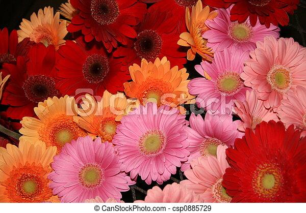 daisies - csp0885729