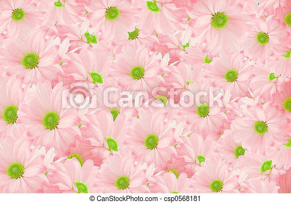 daisy background - csp0568181