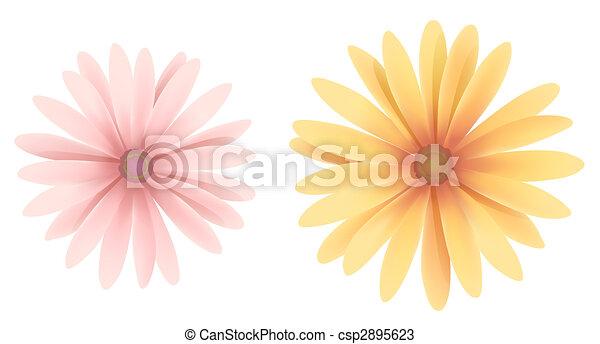 daisy - csp2895623