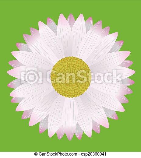 Daisy - csp20360041