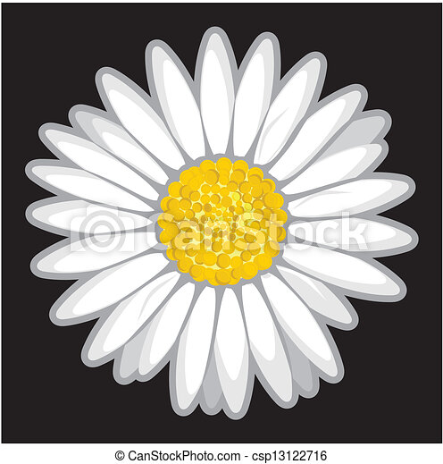 Daisy flower isolated on black  - csp13122716