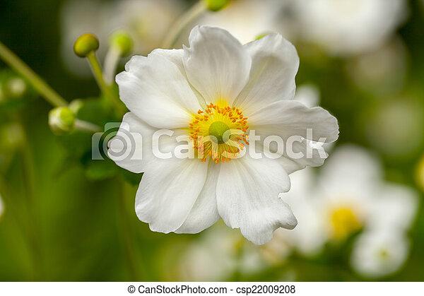 Daisy Flower - csp22009208