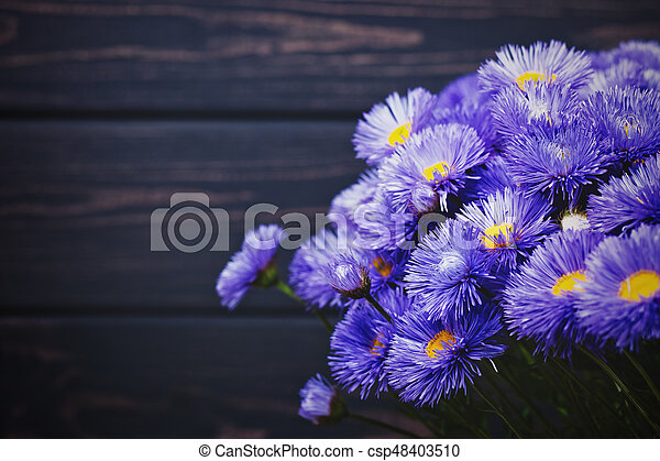 Daisy flowers, beauty still life against old wooden desk - csp48403510