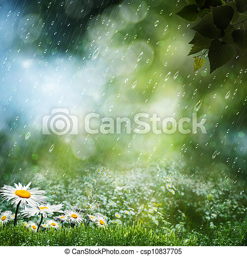 Daisy flowers under the sweet rain, natural backgrounds - csp10837705
