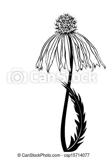 daisy - csp15714077