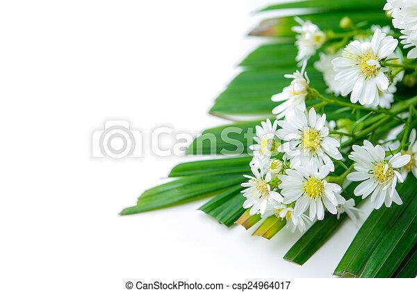 Daisy - csp24964017