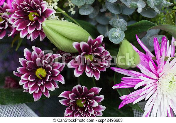daisy - csp42496683