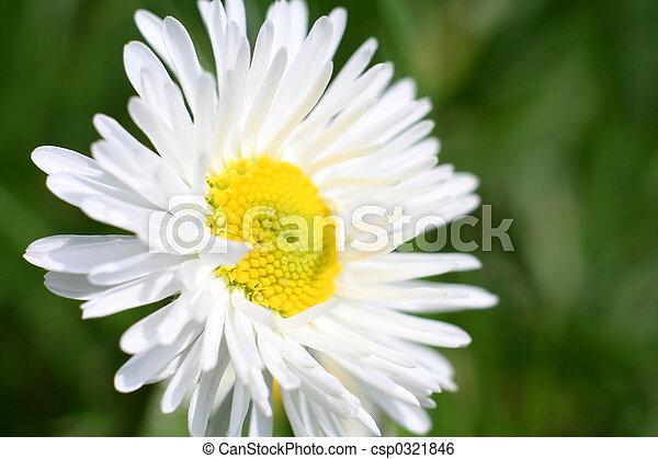 Daisy - csp0321846