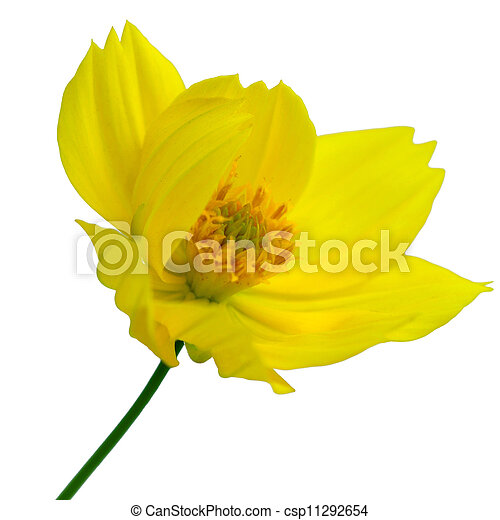 Daisy - csp11292654