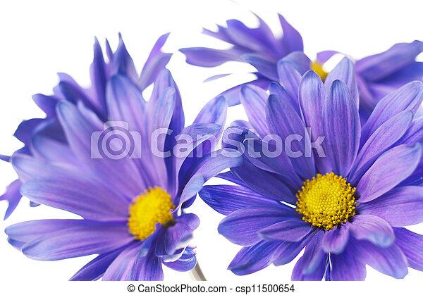daisy - csp11500654
