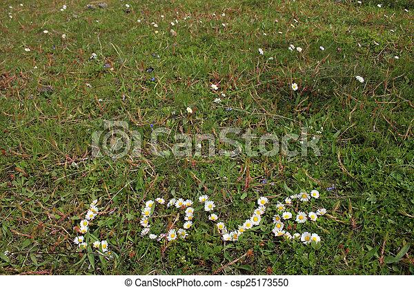 daisy - csp25173550