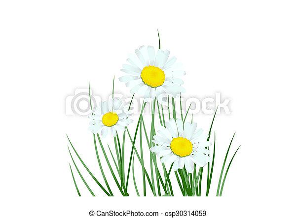 Daisy - csp30314059