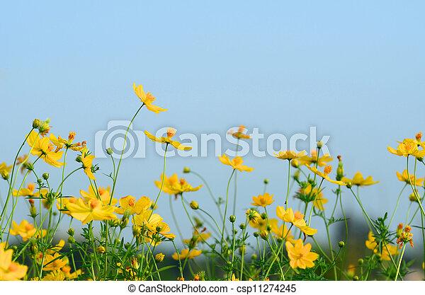 Daisy - csp11274245