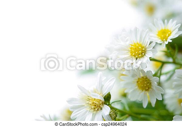 Daisy - csp24964024