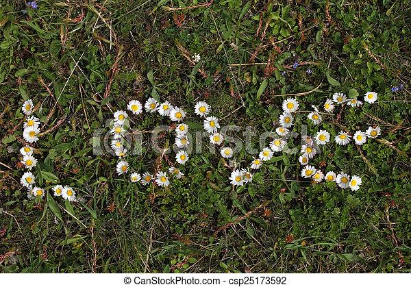 daisy - csp25173592