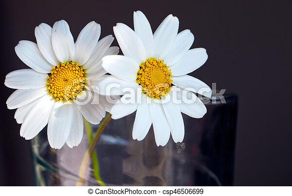Daisy - csp46506699