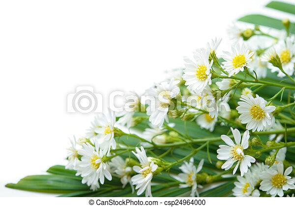 Daisy - csp24964000
