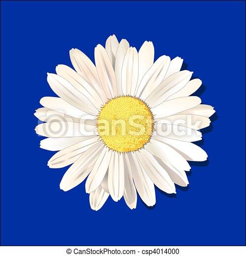 daisy - csp4014000