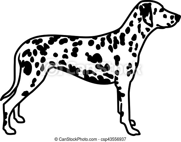 dalmatian standing vectors search clip art illustration drawings rh canstockphoto com dalmatian puppy clipart dalmatian clipart free
